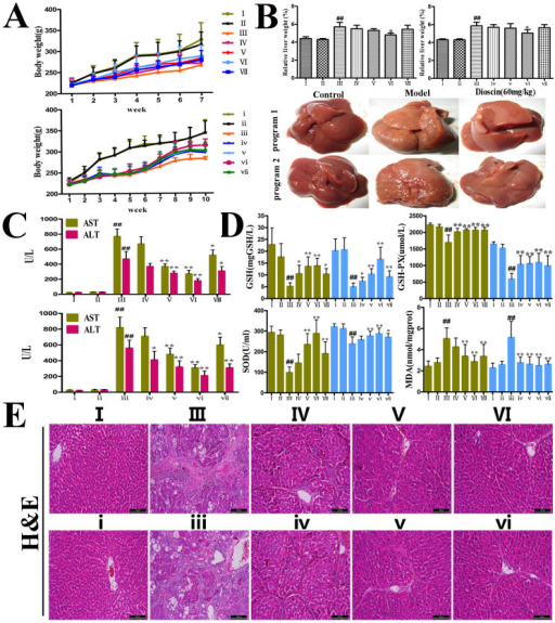 Inhibitory effects of dioscin on CCl4-induced hepatotoxicity.In program I, the rats were injected twice a week with CCl4 during 7 weeks in the presence or absence of dioscin, and in program II, CCl4 was injected for 10 weeks without dioscin, or after 4 weeks of CCl4, dioscin was administered together with CCl4 for additional times. (A–B) Effects of dioscin on rat body weights and livers. (C) Effects of dioscin on serum AST and ALT activities in rats as a measure for liver injury. (D) Effects of dioscin on GSH, GSH-Px, SOD and MDA levels. (E) H&E staining of representative liver sections (magnification, 100×). Values are expressed as the mean ± SD (n ≥ 3). *p < 0.05, **p < 0.01 vs. model group; ##p < 0.01 vs. normal control group.