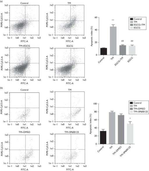 Fluorescence activated cell-sorting Annexin V–FITC/propidium iodide (PI) kit was used to detect cell apoptosis. (a, b) EGCG and SP600125 pretreatment significantly decreased cell apoptosis. *P<0.05 versus the thrombin group, **P<0.01 versus control group, ##P<0.01 versus thrombin group. Each column represents the mean±SE. n=3. DMSO, dimethyl sulfoxide; EGCG, (−)-epigallocatechin-3-gallate; TM, thrombin.