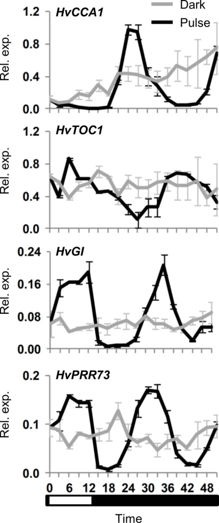 Initiation of circadian oscillations following a single light pulse.Clock gene expression, assayed by qRT-PCR, in 5 day old barley seedlings (cv. Sonja) germinated and grown in constant darkness then exposed to a 12 hour light pulse (black line) versus control plants maintained in darkness (grey line). RNA was extracted from 3 biological repeats. Average expression is shown relative to ACTIN (Rel. exp.), error bars show standard error. Horizontal axis labels indicate the time (hours) relative to when the first sample was harvested. The white and black bar indicates duration of the light period relative to sampling timepoints (white corresponds to the light period).