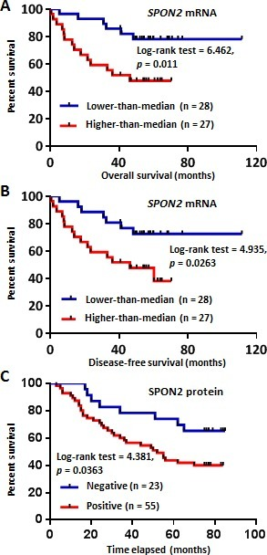 Kaplan-Meier analysis of SPON2 expression in CRC patients based on the Oncomine dataset mining and TMA-IHC analysisA. Overall survival analysis of CRC patients with different SPON2 gene expression using Smith Colorectal 2 dataset from Oncomine database. The low or high expression of SPON2 was defined as lower-than the median or higher-than the median. B. Disease-free survival analysis of CRC patients with different SPON2 expression using Smith Colorectal 2 dataset. C. Positive SPON2 protein expression in CRC patients predicted poor prognosis as revealed by TMA-IHC analysis. The commercial TMA contains 90 CRC cases, while those cases without follow-up information and/or without detectable epithelial cells were excluded from the analysis. The p value was calculated using the Log-rank (Mantel-Cox) test.