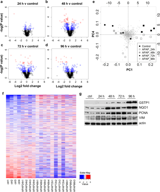 Widespread changes in protein abundance occur in rat liver following repeated acetaminophen exposure.(a–d) Volcano plots of all common proteins quantified by iTRAQ analysis, at each time-point (a) 24 h, (b) 48 h, (c) 72 h, (d) 96 h, relative to vehicle control. A complete list is provided in Supplementary Tables 1a–d. Coloured circles represent differential expression (blue - raw P value, p < 0.05; red – FDR, p ≤ 0.05). (e) Principal Components Analysis identified the greatest differences between single and repeat dose samples. (f ) Heat map representing the 1169 proteins common to all samples and all time-points identified distinct changes in protein abundance in repeat-dosed animals (red indicates increased abundance, blue indicates decreased abundance). (g) Western blots for GSTP1, NQO1, PCNA and VIM, performed in order to validate proteomic findings. Representative blots of two rats at each time-point are shown. Actin was used as a loading control.