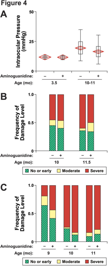 Aminoguanidine treatment does not alter IOP or glaucomatous neurodegeneration. (A) Ag-treatment did not affect the pre-glaucomatous IOP of DBA/2J mice (3.5 months: average mmHg ± s.e.m., number of eyes examined; control 11.8 ± 0.2, 19; Ag-treated 11.7 ± 0.2, 23; P = 0.76). Ag-treatment did not affect the ocular hypertension during the key window in disease progression, between 10 and 11 months (control, 18.2 ± 1.0, 31; Ag-treatment, 16.6 ± 1.3, 30; P = 0.334). (B) Ag-treatment from 5 months of age does not alter glaucomatous neurodegeneration (given as total number analyzed, treatment group, number of that treatment with mild, moderate, severe glaucoma) 10 months, 51 controls, 22,6,23; 51 Ag-treated 21,6,25; P = 0.293; 11.5 months, 55 controls, 18,6,31; 46 Ag-treated, 16,7,23, P = 0.896. (C) Ag-treatment beginning at 3 months of age does not protect from glaucomatous neurodegeneration. Nine months old treated mice actually tended to have more severe damage (given as total number analyzed, treatment group, number of that treatment with mild, moderate, severe glaucoma) 9 months, 42 controls, 27,7,8; 41 Ag-treated 17,6,18; P = 0.04; 10 months, 43 controls, 10,1,32; 49 Ag-treated, 6,2,41, P = 0.4; 11 months, 43 controls, 4,3,36; 37 Ag-treated, 5,3,29, P = 0.8. The experiments shown in B and C were performed at different institutions (see text).