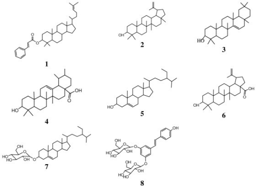 Chemical structures of compounds isolated from the roots of Ficus polita. 1: euphol-3-O-cinnamate; 2: lupeol; 3: taraxar-14-ene; 4: ursolic acid; 5: ß-sitosterol, 6: betulinic acid; 7: sitosterol-3-O-ß-D-glucopyranoside; 8: (E)-3,5,4'-trihydroxy-stilbene-3,5-O-β-D-diglucopyranoside.