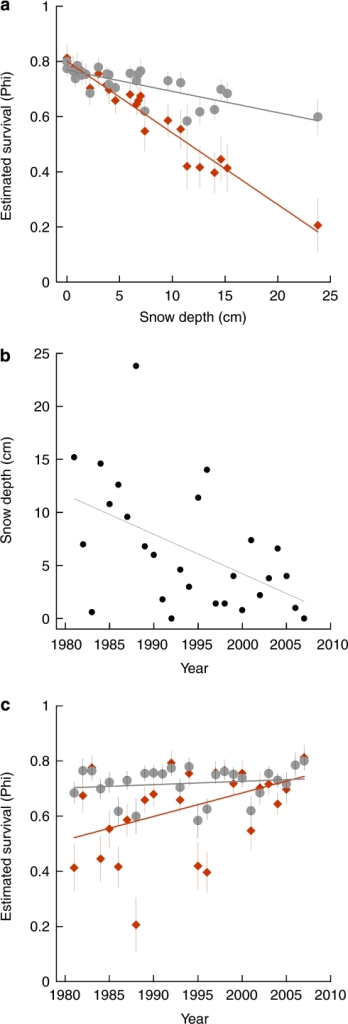 Survival of grey and brown tawny owls in relation to changes in snow depth.Survival estimates are based on averaging all candidate capture–mark–recapture models considering the effects of food supply (vole abundance), average snow depth and average temperature during a critical period in winter (see Supplementary Information). Climatic data are derived from the database of the Finnish Meteorological Institute. (a) Survival of brown and grey tawny owl colour morphs in relation to snow depth. (b) Snow depth during the critical period for tawny owl survival during 1981–2008 in Southern Finland. (c) Survival of grey and brown tawny owl colour morphs during 1981–2008. Grey tawny owls are denoted by grey circles and brown ones by red diamonds. Error bars are standard errors of the estimated survival and the lines are regression slopes based on the data.