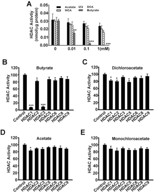 Lack of inhibitory effect on histone deacetylase (HDAC) activity by dichloroacetate (DCA)(A) SW620 cell lysates were used as the source of HDAC activity. Assays were done in the absence or presence of acetate, monochloroacetate (MCA), dichloroacetate (DCA), or butyrate at indicated concentrations. (B-E) Inhibition of human recombinant HDAC isoforms by butyrate, dichloroacetate, acetate, and monochloroacetate. Concentration of the fatty acids was 1 mM. Data are presented as percent of control activity measured in the absence of the fatty acids. *, p < 0.05; **, p < 0.01; ***, p < 0.001.