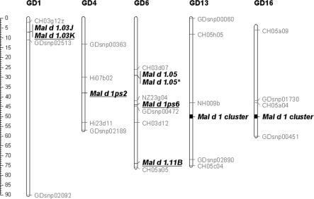 Schematic overview of Mal d 1 allergen gene positions in the apple genetic map. Genetic positions of Mal d 1 loci are estimated through retrieval of their physical location in the GD whole genome relative to reference marker sequences. Genetic positions of reference markers are indicated according to Supplementary Figure 9 in Velasco et al. (2010). Mal d 1 loci in new genomic regions are underlined; *Mal d 1.05 in tandem duplication