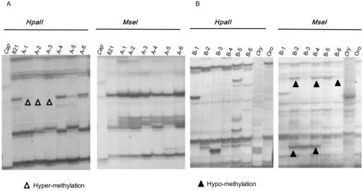 Examples of typical MSAP patterns detected in 12 introgression lines and their parents.The gel profiles in parts A and B were produced by primer combinations of EcorI-ACT+H/M-TAG and EcorI-ACT+H/M-TTC, respectively. The denotations for the parents are the same as in Figure 3.