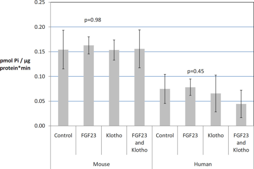 Fibroblast growth factor 23 (50 ng/mL) with or without klotho (50 ng/mL) had no significant effect on sodium-dependent phosphate uptake in both mouse and human VSMCs. Data expressed as mean ± s.d. and p-values for the human and mouse data sets are presented.
