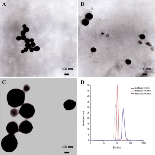 TEM images of NPs. shBcl-2-loaded NPs (50:1) (A), shBcl-2-loaded NPs (100:1) (B), and shBcl-2-loaded NPs (200:1) (C). DLS analysis of the obtained shBcl-2-loaded NPs (D).