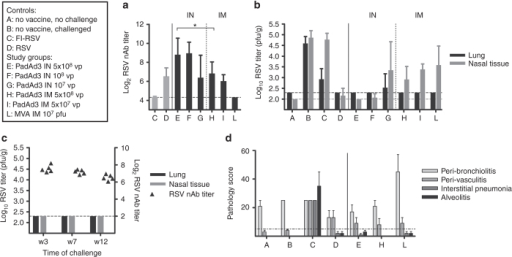 Vaccine immunogenicity, efficacy, safety, and durability in cotton rats. Controls and vaccine study groups are described in the text box. Animals were vaccinated with different doses of PanAd3-RSV (IN or IM as indicated), or MVA-RSV (IM). Seven weeks later they were challenged IN with 1 × 105 pfu of RSV/A/long strain. FI-RSV: formalin-inactivated RSV (Lot 100), two doses IM. RSV: previous infection IN with 1 × 105 pfu of RSV/A/long strain (a) RSV neutralizing antibody titers in vaccinated and control animals expressed as the serum dilution (log2) reducing plaques by 60% compared to controls. Sera were collected at study week 7 at the time of challenge. Bars represent group mean + SD. (b) RSV titers in lung homogenates and nasal tissue collected 5 days after RSV challenge. Data are expressed as RSV plaque forming units per gram of tissue (pfu/g). Bars represent group mean + SD. (c) RSV neutralizing titers (filled symbols plotted on right y axis, individual animals) and virus titers in lung and nasal tissue (black and gray bars plotted on left y axis, group mean + SD) at week 3, 7, and 12 after IM vaccination with 5 × 108 vp PanAd3-RSV. (d) Histological analysis of lung sections 5 days after RSV challenge. Formalin-fixed, paraffin-embedded lung sections were stained with hematoxylin and eosin. Four parameters of pulmonary inflammation were evaluated: peribronchiolitis (PB), perivasculitis (PV), interstitial pneumonia (IP), and alveolitis (A). Slides are scored blind on a 0–4 severity scale, and values are then converted to a 0–100% histopathology score. The dashed line (set at 5%) represents a threshold of IP and A pathology score considered not compatible with ERD. Bars show group mean + SEM.