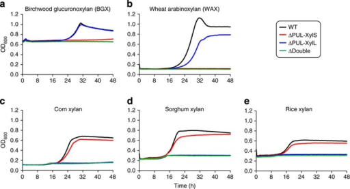 Growth profile of wild type and mutants of B. ovatus on xylans.WT and PUL deletion mutants were cultured in minimal media containing different xylans at 0.5% (w/v) as the sole carbon source. Birchwood glucuronoxylan (BGX; (a)) and wheat arabinoxylan (WAX; (b)) are relatively simple, sparsely decorated structures, while corn (c), sorghum (d) and rice (e) xylans are more complex heavily decorated glucuronoarabinoxylans (GAXs). The high starting OD for BGX is due to the background turbidity of the polysaccharide. A total of 6 replicate cultures were monitored at 20 min intervals for each substrate and used to generate the average growth curves shown.