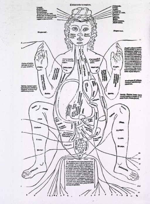 <p>Female figure, full length, front view, showing internal parts.</p>