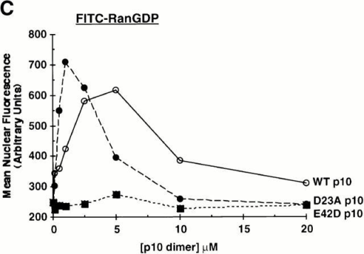 Nuclear accumulation of FITC–RanGDP. (A) Digitonin-permeabilized BRL cells were incubated with 2 μM FITC–RanGDP in TB containing 2 mg/ml BSA for 20 min at room temperature, washed, and fixed. All samples, except those labeled No Energy, also contained 0.5 mM GTP, 1 mM ATP, 5 mM phosphocreatine, and 20 U/ml creatine phosphokinase. Where indicated, the following proteins were also added: 1.0 μM wt p10 (dimer), and 0.25 μM Kap-β1 or Kap-β1(45–462). (B) Quantitation of the nuclear import of FITC–RanGDP in digitonin-permeabilized BRL cells was performed as described in the Materials and Methods. All samples contained 1.5 μM FITC–RanGDP and 2 mg/ml BSA in TB, and the import reaction was incubated for 15 min at room temperature before washing and fixation. Individual samples also contained the indicated concentration of wt p10 dimer and: ○, 0.5 mM GDP; •, 0.5 mM GTP; □, 0.5 mM GTP + 0.25 μM Kap-α2; and ▪, 0.5 mM GTP + 0.25 μM Kap-β1. (C) Quantitation of the nuclear import obtained of FITC–RanGDP in the presence of increasing concentrations of: ○, WT p10; •, D23A p10; and ▪, E42D p10. In addition to 1.5 μM FITC–RanGDP, all the samples contained 0.5 mM GTP, 0.25 μM Kap-β1, and 2 mg/ml BSA in TB. Import was for 7.5 min before washing and fixation.