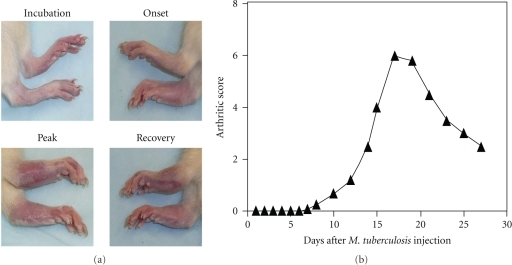 """adjuvant arthritis experiment Uppsala, sweden], """"percutaneous exposure of adjuvant oil causes arthritis in da rats,"""" clinical experimental immunology, (1994) may96(2):281-4 (""""refers to olive oil, which contains."""