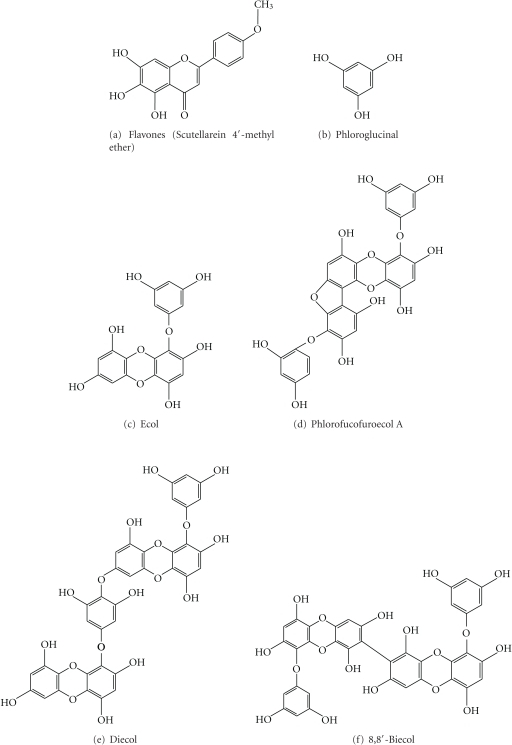 Anticancer polyphenolic compounds from marine floras.