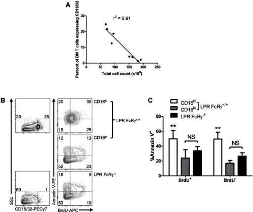 Fc receptor γ-expressing DN T cells are lost with disease progression in LPR mice and have an increased rate of apoptosis ex vivo.A. Splenocytes of young (≤12 weeks, n = 4) and older (≥16 weeks, n = 4) female LPR mice were counted and stained for expression of CD4, CD8, NK1.1, TCRβ, and CD16 and then examined by flow cytometry. The percentage of DN T cells expressing CD16 was examined as a function of total spleen cell count; linear regression r2 = 0.91, p = 0.0002. B. LPR FcRγ+/+ (n = 5) and LPR FcRγ−/− mice (n = 5) aged 8 weeks were fed BrdU for 6 days. Their splenocytes were then stained for expression of CD4, CD8, NK1.1, TCRβ, annexin V and CD16, fixed and stained for BrdU incorporation. They were then examined by flow cytometry. Left panels show expression of CD16 versus side light scatter in LPR FcRγ+/+ (top) and LPR FcRγ−/− DN T cells (bottom); CD16hi and CD16lo gates are indicated, and the numbers above each gate indicate the percentage of DN T cells falling into the indicated gates. Right panels show representative BrdU and annexin V staining in LPR FcRγ−/− DN T cells (bottom) and in the CD16lo and CD16hi subsets of LPR FcRγ+/+ DN T cells (middle and top panels, respectively). Numbers inside contour plots reflect the percentage of gated cells falling into each quadrant. C. The percentages of DN T cells staining with annexin V in LPR FcRγ−/− mice and in the CD16hi and CD16lo subsets of LPR FcRγ+/+ mice are presented with respect to BrdU incorporation. Two-way ANOVA p<0.0001; **Bonferroni post tests p<0.01 compared with either CD16lo or LPR FcRγ−/− DN T cells amongst both BrdU+ and BrdU− DN T cells.