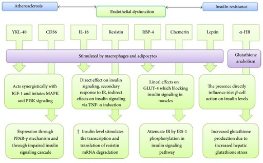Summary of potential biomarkers mechanism.