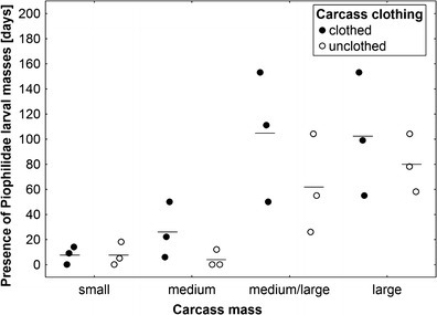 The effect of carcass mass and carcass clothing on the presence of Piophilidae larval masses. Carcass mass: small 5–15 kg, medium 15.1–30 kg, medium/large 35–50 kg and large 55–70 kg. Horizontal lines indicate the mean, while open and closed circles represent raw data