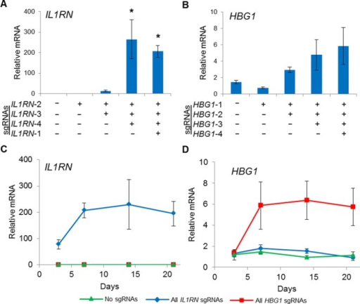 Stable gene activation by dCas9VP64 in HEK293T cells using a single multiplex lentiviral vector. HEK293T cells were transduced with lentivirus to stably express dCas9VP64 and the indicated combinations of sgRNAs. Activation of the endogenous (A) IL1RN and (B) HBG1 loci at 7 days post-transduction were tunable by varying the number of sgRNAs delivered (*P < 0.05 versus no sgRNAs). Peak levels of endogenous (C) IL1RN and (D) HBG1 were observed 6 days post-transduction and the level of activation was sustained through day 21.