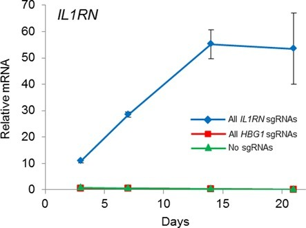 Stable gene activation by dCas9VP64 in primary human fibroblasts using a single multiplex lentiviral vector. Primary human dermal fibroblasts were transduced with lentivirus to stably co-express dCas9VP64 and four sgRNAs targeted to the IL1RN promoter. Peak levels of endogenous IL1RN were observed 14 days post-transduction and the level of activation was sustained through day 21.