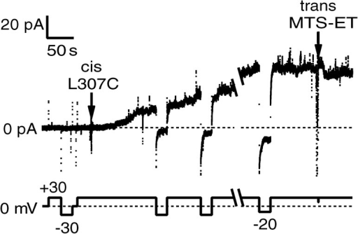 Effect of trans MTS-ET on T-domain mutant L307C. The top trace is current and the bottom trace is voltage, with both plotted against time. After the addition of 4 ng L307C to the cis compartment (first arrow), the current at 30 mV gradually increased as channels formed in the membrane. Upon switching to negative voltage, the magnitude of the current rapidly decreased toward zero, indicating blocking by the amino-terminal His6-tag (Senzel et al., 1998); the current rapidly recovered upon returning to positive voltage. At the second arrow, after the channel activity had stabilized, 200 µg MTS-ET was added to the trans compartment, resulting in a decrease in current of ∼19%. The solutions were 1 M KCl, 2 mM CaCl2, 1 mM EDTA, with 20 mM malic acid, pH 5.3, in the cis compartment and 20 mM HEPES, pH 7.2, in the trans compartment. The break in the record was 3.6 min.