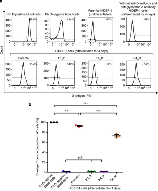 Flow cytometric analysis of D antigen expression in mutated cells.Parental and RHD-mutated (biallelic, E1_B, E4_B; monoallelic, E4_M) HiDEP-1 cells were induced for differentiation for 4 days and subjected to flow cytometry. D antigen expression was determined in glycophorin A+ cells. (a) Representative histograms. (b) The percentage of D antigen-positive cells in the population of glycophorin A-positive cells. ANOVA followed with Bonferroni's multiple comparison was performed (***P<0.001, **P<0.01, ns=not significant; n=3). Error bars represent the s.e.m.