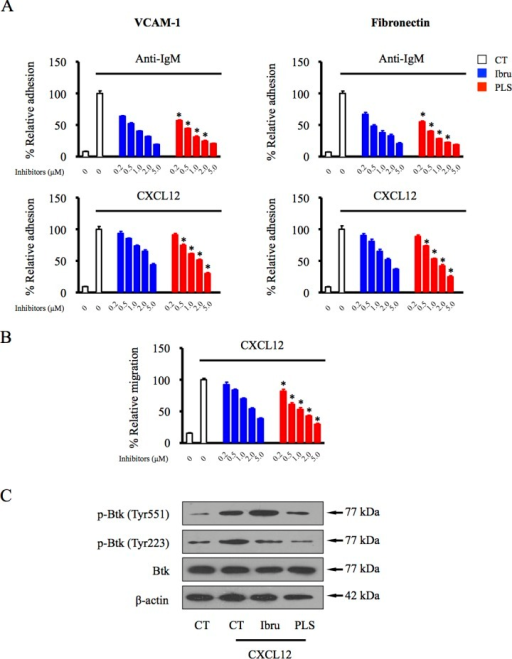 PLS-123 overcomes BCR- and chemokine-mediated lymphoma cell adhesion and migrationA.Namalwa cells pretreated with increasing concentrations of ibrutinib, PLS-123 (0.2, 0.5, 1, 2 and 5 μM) or vehicle were stimulated with anti-IgM or CXCL12 for 30 mins, and then tumor cells were subjected to adhesion assays on plates precoated with fibronectin or VCAM-1. B. Namalwa cells were treated with increasing concentration of ibrutinib, PLS-123 (0.2, 0.5, 1, 2 and 5 μM) or vehicle and subjected to a chemotaxis migration assay in transwell plates with filters coated with VCAM-1, and CXCL12 was added into the lower chamber as a chemoattractant. C. Namalwa cells were pretreated with 1 μM ibrutinib, 1 μM PLS-123 or vehicle for 1 hour and then stimulated or not with CXCL12 for 10 minutes. Whole cell extracts were probed by indicated antibodies for Western blot analysis. *Significantly decreased compared with ibrutinib treatment (p < 0.05). The results are representative of at least three similar experiments.