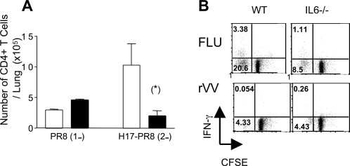 Challenge of H17 influenza virus immune mice with the heterologous virus, PR8.WT and IL-6−/− mice infected 6 weeks previously with H17 influenza virus were rechallenged i.n. with 20 HAU of the PR8 virus. Four days post secondary infection the lungs were harvested and the number of CD4+ T cells analyzed by flow cytometry (A). Proliferation and cytokine production was measured in splenocytes of H17-immune mice re-challenged 4 days previously with PR8 virus (B). The cells were labelled with CFSE and incubated for 6 days with H17 influenza-infected APCs as described in materials and methods. Specific proliferation was measured CFSE dilution and IFNγ production on gated CD4+ cells. The dot plots show a representative of 5 mice per group.