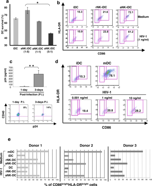 aNK cells induce the maturation of primary immature HIV-1-infected DCs.(a) iDCs, generated from purified CD14+ monocytes in the presence of IL-4 and GM-CSF, were cocultured during 24 h with aNK cells at different ratios. DC survival was determined by flow cytometry with the 7-AAD assay. Surviving DCs were identified as 7AAD− CD56− cells. Data represent three independent experiments and values are means±sd. (b) aNK cells induce the maturation of iDCs. Flow cytometry analysis of iDCs, which were either infected with HIV-1BaL (1 ng/ml of p24) for 3 h or uninfected, were incubated with rNK cells or aNK cells at a ratio of 1∶5. Co-staining with HLA-DR and CD86 specific antibodies allowed the identification of mature DCs (CD86brightHLA-DRbright). Data from a representative experiment out of three independent experiments are shown. (c) The conditions of infection used in this study were those of a productive infection of iDCs, as shown at day 3 by a significant p24 detection in culture supernatant of infected iDCs and intracellular detection by flow cytometry of p24 in DC targeted by CD40 expression. Experiments were performed on DCs from three independent donors, and values are means±sd. (d) HIV-1 infection does not induce by itself the maturation of iDC, as shown by CD86/HLA-DR dual staining of iDCs infected with 0.001 to 10 ng/ml p24 HIV-1BaL. The proportion of mDCs induced by LPS (DC0) (78.1% CD86brightHLA-DRbright) is shown as a positive control. (e) The proportion of mature CD86brightHLA-DRbright DCs induced in the indicated cocultures of infected or uninfected iDCs with either rNK or aNK cells are shown. These experiments have been performed on primary cells from a number of donors, and representative data from three of them are shown. When indicated, statistical analyses were made with the non-parametric Mann-Whitney test. * p<0.05, ** p = 0.02.