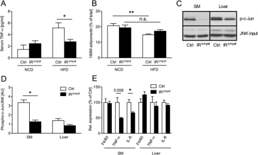 The obesity-associated systemic pro-inflammatory state is reduced in IRΔmyel-mice.(A) Serum TNF-α concentration in male control- and IRΔmyel-mice fed either NCD or HFD. (n = 12 mice per genotype on NCD; n = 21 mice per genotype on HFD.) (B) Percentage of serum high molecular weight (HMW) from total adiponectin in male control- and IRΔmyel-mice fed either NCD or HFD. (n = 10–12 mice per genotype and diet.) (C) In vitro phosphorylation of c-Jun (p-c-Jun) in skeletal muscle (SM) and liver lysates from male, HFD-fed control- and IRΔmyel-mice. Total JNK input was used as loading control. (representative western blot shown). (D) Densitometrical analysis of phospho-c-Jun vs total JNK. (AU = arbitrary units; SM = skeletal muscle; n = 6 mice per genotype.) (E) Relative expression of F4/80, TNF-α and IL-6 mRNA in skeletal muscle (SM) and liver of male, HFD-fed control- and IRΔmyel-mice. (n = 6 mice per genotype.) (Results are means ± SEM; white bars represent controls and black bars represent IRΔmyel-mice; *p≤0.05; **p≤0.01; n.s. = not significant.)