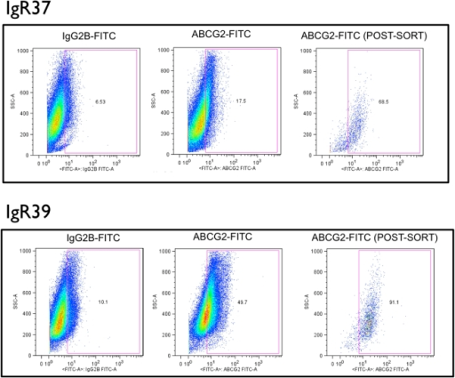 Flow cytometry detection and sorting of ABCG2+ subpopulations from cultures of human melanoma cell lines.Primary melanoma IGR39 cells and metastatic melanoma IGR37 cells were incubated with the indicated fluorescent FITC-conjugated antibodies and analyzed by flow cytometry as described in Materials and Methods. Y-axes, side scatter; x-axes, relative fluorescence intensity. Left panels, analyses with isotype (IgG) control antibodies; middle panels, analyses with anti-ABCG2 FITC-conjugated antibodies. After FACS isolation based on the indicated gate (blue outline), ABCG2+ sorted cells were reanalyzed to confirm enrichment (right panels). Numbers, percent of total evaluated cells.