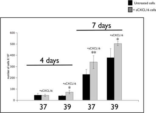 Evaluation of the effect of the CXCR6 ligand CXCL16 on melanoma cell line growth.Twenty thousand cells were seeded overnight in individual wells of 12 multi-well plates in complete medium growth condition. Recombinant sCXCL16 (100 ng/ml) was added the next day and replaced every 48 hours. On the 4th and 7th day of culture, the cells were trypsinized, and viable cell numbers determined. The bar graph represents the mean ± S.D. of three independent experiments each carried out in triplicate. *, p<0.01 vs. untreated cells (black bars); **, p<0.001 vs. untreated cells (black bars).
