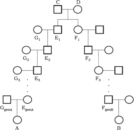 Pedigree for a pair of individuals with two common ancestors: individuals A and B share two MRCAs, C and D. There are genA generations between the MRCAs and A (i.e. genA+1 meioses separating them) and genB generations between the MRCAs and B. The sex of the individuals is arbitrary.