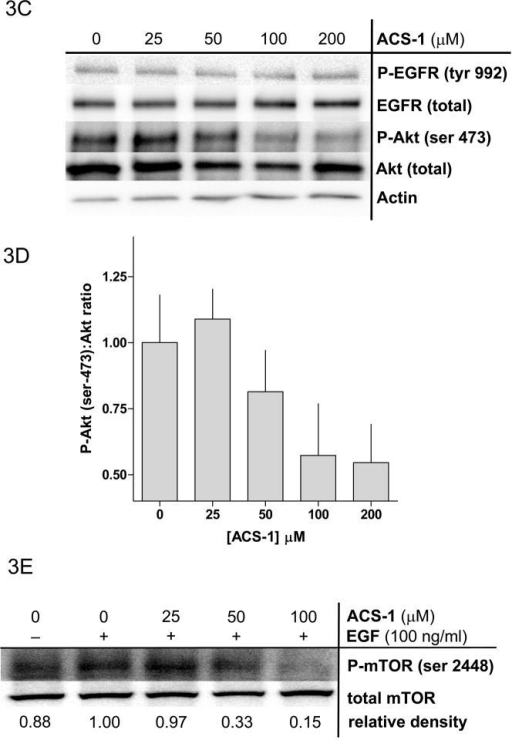 ACS-1 inhibits EGF activation of Akt and mTOR in MB231 and A549 cells. Serum starved cells were treated with ACS-1 for 2 hours and stimulated with EGF. (A) Western blot analysis of EGF signaling pathway activation in response to EGF and/or ACS-1. (B) Graphical representation of Akt activation in MB231 cells; ratios of P-Akt-(ser 473):total Akt are presented as percent of EGF control (mean ± SD). (C) Western blot analysis of ACS-1 effects on EGF signaling in A549 cells. (D) Graphical representation of Akt activation in A549 cells; ratios of P-Akt-(ser 473):total Akt are presented as percent of EGF control (mean ± SD). (E) Representative western blot analysis of P-mTOR-(ser 2448) in MB231 cells treated with ACS-1 and stimulated with EGF.