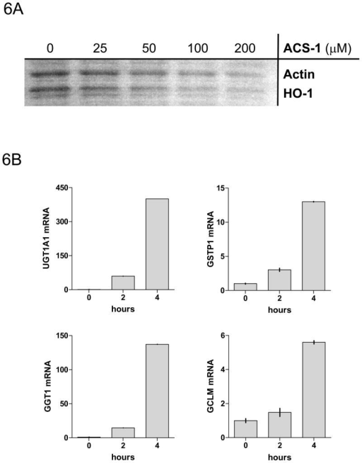 ACS-1 effects PP2A activity independent of protein production or phase II activation. Serum starved MB231 cells were treated with ACS-1 for 2 hours. (A) Western blot analysis of HO-1 and actin indicate that ARE controlled genes are not upregulated within the time of PP2A activation by ACS-1. (B) MB231 cells were exposed to 50 μM ACS-1 for indicated times and the induction of phase II genes (UGTA1, GSTP1, GCT1, and GCLM) were measured by RT-PCR. (C) Effect of ACS-1 on cellular cAMP levels. MB231 cells were exposed to forskolin or ACS-1 for 2 hours and cAMP was measured via ELISA.