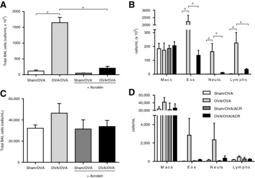 Acrolein exposure attenuates allergic airway inflammation in OVA-sensitized and challenged mice. C57BL/6 mice were sensitized and exposed as shown in Figure 1. Bronchoalveolar lavage fluid (BALF) was collected on day 18 (A,B) or 14 (6 hrs after OVA challenge; C,D) for enumeration of total cells (A, C) and differential cell counts (B,D). Results are expressed as mean ± SEM (n = 3-10/group) (*, p < 0.05).