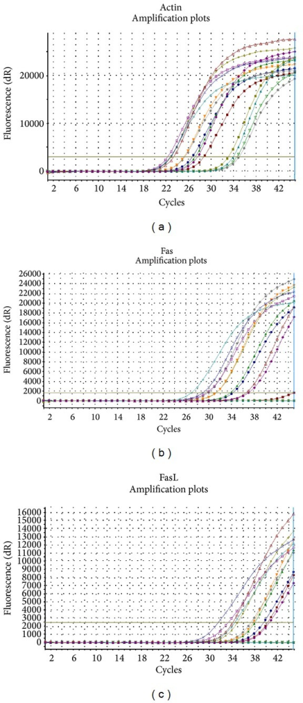 Amplification plots of (a) actin gene; (b) Fas gene; and (c) FasL gene.