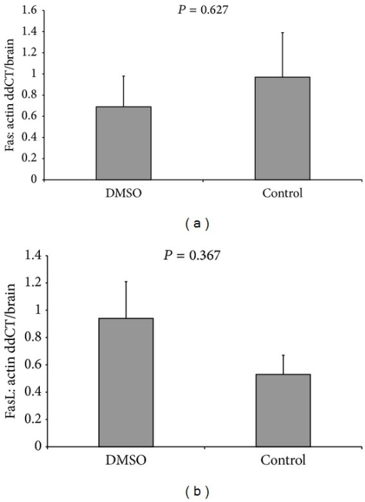 Levels of (a) Fas protein in group C and DMSO and (b) FasL protein in group C and DMSO.