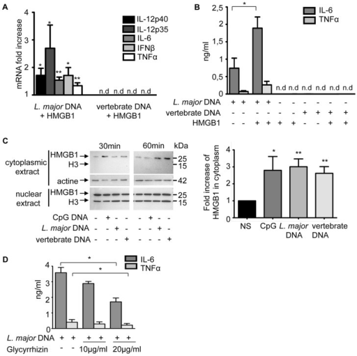 The contribution of HMGB1 to TLR9 activation.C57BL/6 BMDCs were stimulated with L. major or vertebrate DNA (20 µg) complexed with rHMGB1 (1 µg) or alone (as control and reference) for 6 h. (A) Cytokines mRNA were detected by real-time PCR. The data are expressed as the n-fold increase with the expression in stimulated BMDCs by L. major or vertebrate DNA alone. The mRNA expression levels were normalized to the expression of the HPRT gene. nd: not detectable. (B) IL-6 and TNFα production was measured in supernatants by ELISA. (C) Time-course analysis of HMGB1 in the cytoplasm and nucleus of BMDCs not stimulated (NS) or stimulated by CpG 1826 (1 µg), L. major or vertebrate DNA (20 µg). (left) Analysis was performed by Western Blot at 30 and 60 min post-induction. (right) Quantification of HMGB1 in cytoplasmic extracts was normalized to that of actin and expressed as the n-fold difference with the unstimulated BMDCs. The mean and SEM of six independent experiments, each including both 30 min and 60 min extracts, is represented by the histogram. (D) C57BL/6 BMDCs were stimulated with L. major DNA alone (20 µg) or with glycyrrhizin (10 or 20 µg/ml) for 6 h. Percentage (%) of inhibition  =  [100-{cytokines production by L. major DNA with glycyrrhizin/cytokines production by L. major DNA alone}]×100. The data represent three independent experiments: one representative for C and the mean and SEM in A, B, D (*p<0,05, **p<0,01).