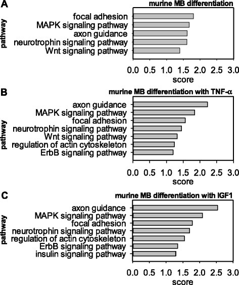 Predicted targets of murine miRNAs associated with myogenic differentiation, TNF-α or IGF1 response are enriched in specific pathways. Selected KEGG pathways within the top 10 enriched KEGG pathways of predicted miRNA targets in mouse for (A) targets of miRNAs which are differentially regulated during differentiation, (B) during differentiation with TNF-α exposure, or (C) IGF1 treatment.