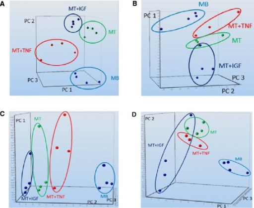 Principal component analyses of miRNA in early skeletal myoblast differentiation and TNF-α or IGF1 treatment. Principal component analyses of murine miRNA expression profiling data after 24 h of induction differentiation and TNF-α or IGF1 treatment. Principal component analysis reveals separation of treatment groups for (A) microarray and (B) qPCR data. Dynamic principal component analysis (group selection myoblasts) identifies the most relevant subset of miRNAs which can describe the treatment effects and separate the effects by principal components for (C) microarray and (D) qPCR data. Axes depict principal component 1 (PC 1), principal component 2 (PC 2), and principal component 3 (PC 3).
