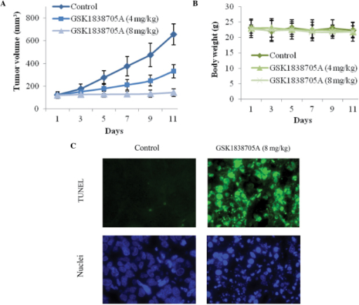 GSK1838705A suppresses glioma tumor growth and induces apoptosis in vivo. (A) Following inoculation of U87MG cells, formulated vehicle control or GSK1838705A (4 and 8 mg/kg) was injected into the corresponding group of nude mice (n=6/group) once daily. The tumors were measured every other day for 11 days and the tumor volumes were calculated. Starting on day 7, the differences between the treatment groups (4 and 8 mg/kg) and the vehicle control group were significant (P<0.05). (B) Body weights of the mice during the course of treatment were measured as an indication of significant cytotoxic effects. The data are expressed as the mean ± standard deviation. No significant differences are observed between any two of the groups during the course of treatment. (C) At the end of treatment, the tumors were harvested. GSK1838705A (8 mg/kg) induced the apoptosis of tumor cells in vivo, determined using a TUNEL assay (green) and nuclear staining with Hoechst (blue). Representative images are shown (magnification, ×40). TUNEL, terminal deoxynucleotidyl transferase dUTP nick end labeling.