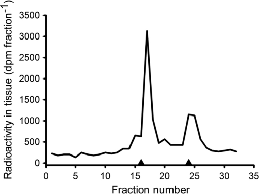 Chromatography on a reverse phase HPLC preparative column of [3H]-E2 radioactivity derived from the 80% ethanol (free and sulfate) fraction of a pooled mussel extract (from Experiment 6). Data are presented as radioactivity (solid line) and UV absorption at 280 nm of E217β-S and E2 standards that were run concurrently (▲; from left to right).