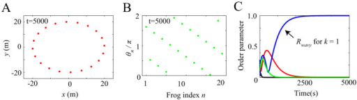 Wavy antisynchronization obtained from our numerical simulation with the same parameter values as those in Figure 2 but with a different initial condition.(A) Spatial structure in a frog chorus. Frogs are positioned along the edge of the circular field at the same interval. (B) Wavy antisynchronization in a frog chorus. Neighboring frogs synchronize in almost anti-phase π, and then a wavy state is generated in each cluster. (C) Time series data of the order parameters Rcluster, Rwavy and Rin. Red, blue, green, and black lines represent the time series data of Rcluster, Rwavy for k = 1 and k = −1, and Rin, respectively. When wavy antisynchronization is realized as shown in Figure 3B, only Rwavy for k = 1 takes a high value around 1.