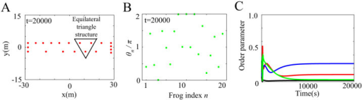 Spatio-temporal dynamics in a frog chorus obtained from numerical simulation with ωn = 8π, N = 20, Knm = 1, and (Lx, Ly) = (56, 4) in equations (3) and (5)–(8).(A) Spatial structure in a frog chorus. Almost equilaterally triangular patterns are generated in many of neighboring frog trios at t = 20000, because of the narrow and long geometric shape of the rectangular field characterized by (Lx, Ly) = (56, 4). (B) Disordered phase dynamics in a frog chorus. The horizontal axis represents the frog index n, and the vertical axis represents θn at t = 20000. A self-organized structure such as two-cluster or wavy antisynchronization is not realized. (C) Time series data of the order parameters, Rcluster, Rwavy, and Rin. Red, blue, green, and black lines represent the time series data of Rcluster, Rwavy for k = 1 and k = −1, and Rin, respectively. All the order parameters take considerably less values than 1.