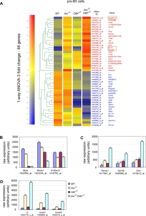 Identification of genes regulated by Aiolos and OBF-1 in pre-BII cells.Gene expression profiles in B220+CD25+ pre-BII cells were determined by MOE430a Affymetrix GeneChip; for each genotype two RNA samples were prepared from independent pools of mice and microarray analysis was done in duplicate. (A) 48 genes showed a 3 fold expression changes in single- or double-mutant pre-BII cells compared to pre-BII cells from wild type mice (p-value cutoff: 0.05). The genes are grouped according to their expression profile in pre-BII cells from all genotypes. Low mRNA expression, blue; high mRNA expression, red. (B) Expression of genes that have been reported previously to be dependent on OBF-1 expression: Myla, Ms4a1, S100a10. (C) Expression of genes that show a strong expression increase specifically in Aio−/−/OBF-1−/− pre-B cells: Ramp1, Gpr49, Gelsolin (Gsn). (D) Expression of the surrogate light chain genes: λ5, VpreB1 and VpreB2. Figures show raw Affymetrix expression score after array normalization.