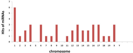 Chromosomal distribution of the miRNA genes identified in this study. The number of hits represents the number of miRNA genes localized on each chromosome. Thus study did not reveal the occurrence of a specific chromosome encompassing most of the mammary-expressed miRNA loci.