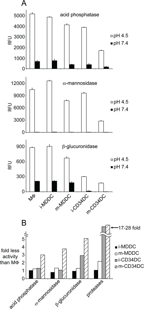 MDDCs and CD34DCs are similar in activity of other lysosomal hydrolases.(A) Cell lysates made from cultures of MΦs, MDDCs, and CD34DCs were incubated together with fluorescent substrates specific for acid phosphatase, α-mannosidase, and β-glucuronidase in either reaction buffer (pH 4.5) or control buffer (pH 7.4). After a 60-minute reaction, detection of the reaction product was measured with a fluorescence spectrophotometer. (B) Compendium of lysosomal hydrolase activity measurements relative to MΦs. While the non-protease acid hydrolases show a similar magnitude of activity in MDDCs and CD34DCs, the differences in proteolysis between the two subsets are accentuated. Immature (i-) and mature (m-) DCs; relative fluorescence units (RFU).