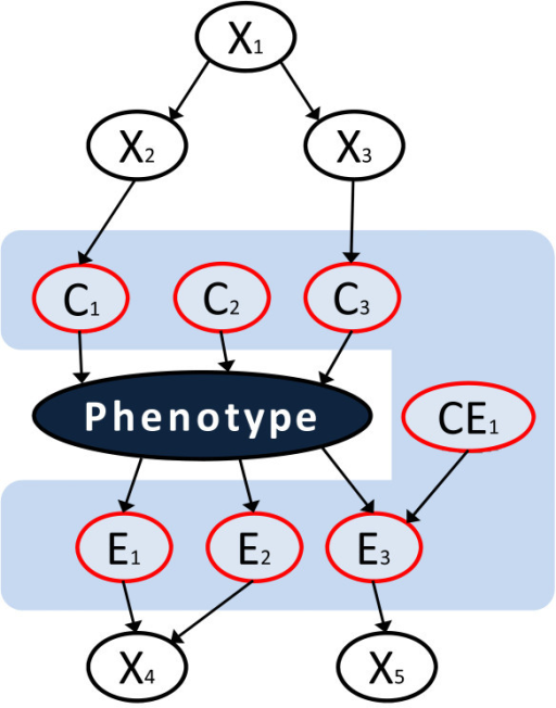 "Graphical representation of the local pathway concept. The local pathway of the phenotype (shown with the ash blue colour) contains all its direct causes (C1, C2, C3), direct effects (E1, E2, E3), and direct causes of the direct effects (CE1). This is exactly the Markov boundary of the phenotype. Other variables (X1, X2, X3, X4, X5) do not belong to the local pathway. This definition of a local pathway ties in a theoretically rigorous manner causality with predictivity, since the Markov boundary is the smallest set of variables that contains the maximum predictive information about the phenotype that is contained in the data. Alternative definitions of the local causal pathway that exclude direct causes of the direct effects (the so-called ""spouse variables"", such as CE1) are also useful and specialized algorithms exist to infer them from data. In GWAS data, the two definitions coincide because of lack of spouse variables in GWAS designs."