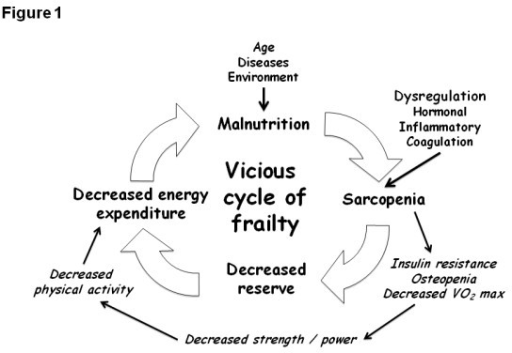 Overview of the vicious cycle of frailty. VO2 max, maxi ...